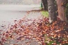 Миллионы женщин любят осень… Листопад и звон дождливых струй… Тщательно отмеренные дозы — Кофе… Шоколад… И поцелуй… И особый запах хризантемы. Чуть прохладный мятный аромат. Что дает надежду перемены… Поцелуи… Кофе… Шоколад…