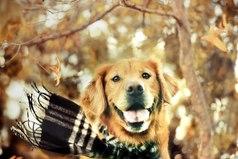Осень - это не время грустить! Осень - это время носить шарфики!