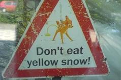 Совет на Новый год - не надо кушать желтый снег.