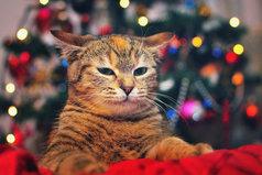 Падает снег, сверкают бенгальские огни, запах мандаринов. Вот он, Новый Год.