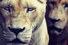 Бойтесь гнева терпеливых.