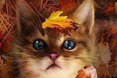 Осень не читает нравоучений. Она мудра. Напоминает о том, о чем важно помнить. «Не поддавайся отчаянию. Наблюдай за листопадом, но со стороны. Прислушивайся к дождю, но не к эмоциям»