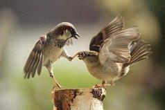Слово не воробей - вылетит, не поймаешь. А если не вылетит, то будет летать внутри и клевать мозг!