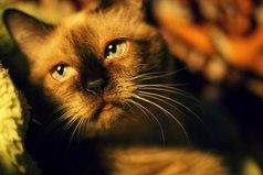 Кто не любит кошек, тот просто еще не встретил свою кошку.