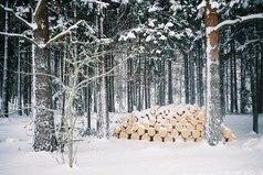 Зима для того и создана в белых тонах, что бы начинать свою жизнь с белого листа.