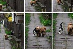 История этой фотографии: каждый день в одно и то же время он приходит, ждет её, и они вместе идут гулять.