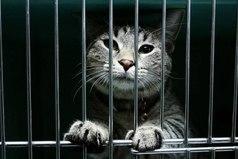 Чтобы купить животное - нужны деньги, чтобы спасти - доброе сердце.