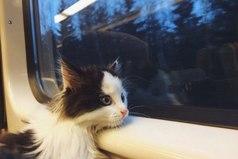 Настроение: смотреть в автобусное окно и думать о жизни.