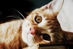 Если у вас есть кошка, вы возвращаетесь не в дом, а домой.