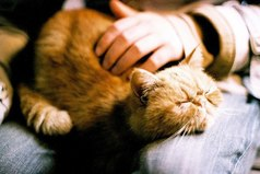 Я вообще животных люблю. Кто-то кошек там любит, то ли собак, а я всех люблю без разбора. Людей только не люблю. Надоели, сука. Носятся и бегают, агрессивные какие-то.