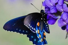 Бабочки — это цветы, которые сорвал ветер...