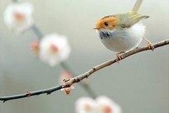 Если в твоей душе осталась хоть одна цветущая ветвь, на неё всегда сядет поющая птица!