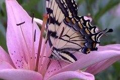 Есть такие моменты, при одном воспоминании о которых, даже спустя долгое время, внутри порхают бабочки и все искрится радостью.