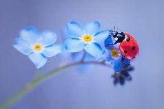 Цветы,как люди,на добро щедры и людям нежность отдавая,они цветут,сердца обогревая,как маленькие,теплые костры.