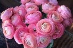 Цветы - это магия, которую мужчинам не понять, ей просто нужно пользоваться.