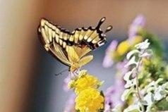 Согласно древней индийской легенде, бабочки передают наши желания небесам...