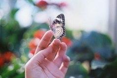 Мир необъятен. Мы никогда не разгадаем его тайну. Поэтому мы должны принимать его таким, какой он есть — чудесной загадкой...