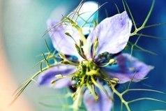Самое главное - это желание жить. Радоваться солнечному лучу, полевому цветку, воробью, чирикающему на ветке... Дар умения быть счастливым в детстве есть почти у всех, но лишь немногие могут сохранить его на всю жизнь...