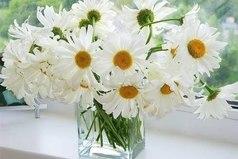 Мне не нужны кольца, шубы, дорогие цветы... Подари мне охапку ромашек и свою улыбку, и я буду счастлива..