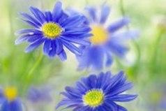 Живи, сохраняя покой. Придет весна, и цветы распустятся сами.