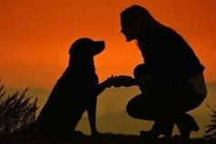 Иногда после разговора с человеком хочется дружелюбно пожать лапу собаке, улыбнуться обезьяне, поклониться слону.