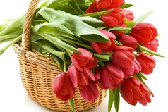 Я поздравляю вас сегодня, пускай сбываются мечты. Прекрасный день – 8 марта, день нежности и красоты!