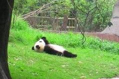 Иногда я просто хочу быть пандой
