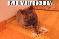 Мое материальное положение - кот дает карманные деньги