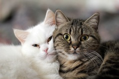 Хорошо быть котом, вся твоя жизнь один большой выходной