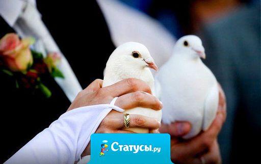 Все поняли, что свадьба была не по любви, когда жених отпустил голубя с запиской: