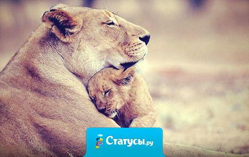 Минуты счастья в памяти храню.  Запомни, мама! Я тебя люблю!