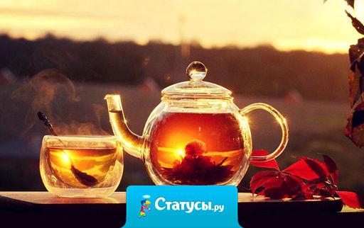 Если вас кто-то бесит – выпейте успокающего чаю на травах, глубоко вздохните и разбейте чашку о его голову