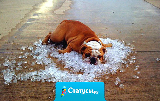 Метеорологи пообещали, что на следующей неделе мы наконец «передохнем от жары». А ударение в слове «передохнем» не поставили