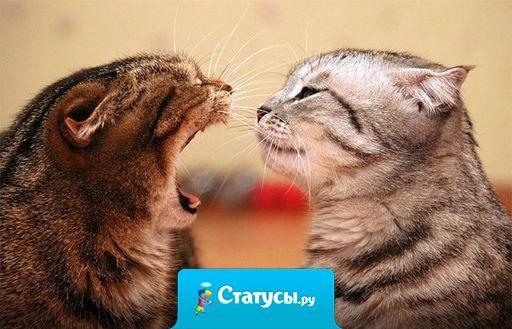 Экзамен хорошего воспитания мужчины и женщины — их поведение во время ссоры.