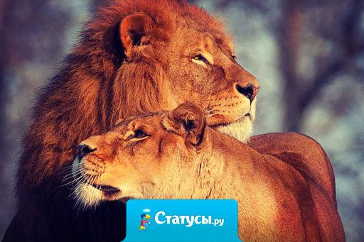 Мартовских котов прошу не беспокоить, у меня свой лев!