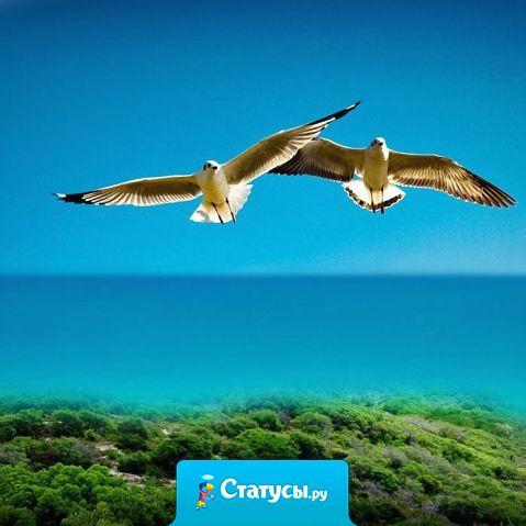 Так хочу быть чайкой - лететь на встречу ветру  и cрать на все и срать на все!