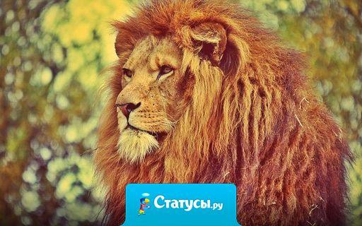 Мужчина должен быть спокойным Львом, а не шумной дворнягой.