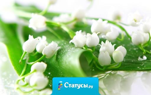Поздравляю с первым мая. С майским праздником весны. И тебе я пожелаю, Мира, радостей, любви.