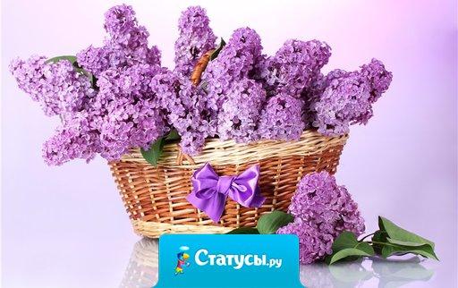 Примите наши поздравления в прекрасный, яркий, майский день! Пусть будет ваше настроение всегда цветущим, как сирень.