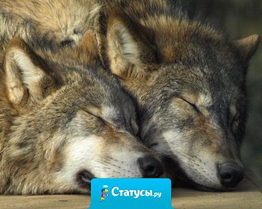 Волк ищет волчицу на всю жизнь, а люди меняют как перчатки