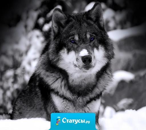 Когда Земле настанет конец,где то появиться Рай,но дорогу туда будут знать только волки.