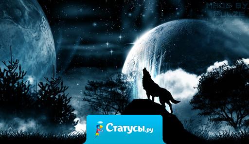 Мой волчий вой, мои загадки. Иду прям в бой при виде схватки. Для вас загадка волка вой, лишь волки воют на убой.