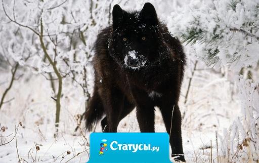 На косые взгляды отвечаю взглядом волка, ты же смотришь на меня словно обиженный ребенок