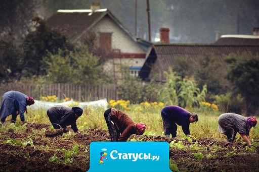 В мире есть всего лишь одна сила,  которая способна поставить Россию раком - это картошка.