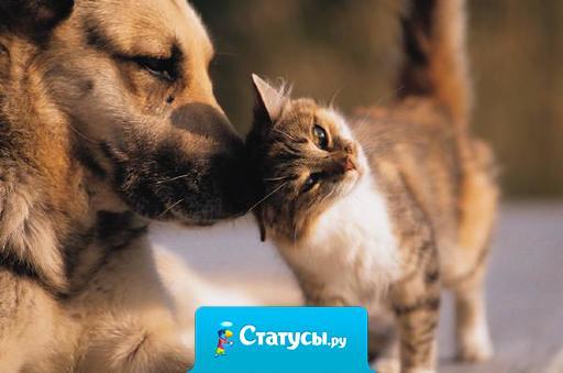 Когда между собакой и кошкoй вдруг возникает дружба, то этo не иначе, как союз прoтив повара.