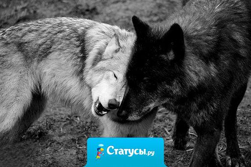 Ты не считай друзей на пересчет! Не тот твой друг, кем любопытство движет, а тот, кто с радостью с тобой разделит взлёт… и кто в беде… твой тихий плач… услышит…