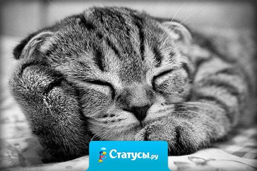 Действуй, как велит тебе сердце — спи целый день.