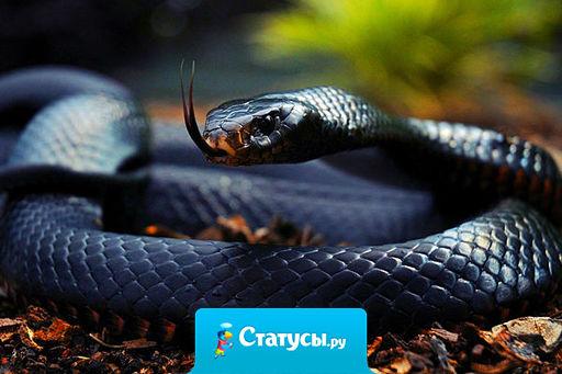 Жена под страхом развода запретила мужу называть тещу змеей. Муж перестал. Теперь по приезду тещи выдает: «Мама приползла».