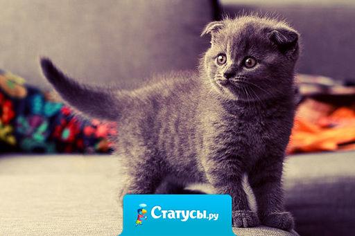 Утро начинается не с кофе, а с того, что бы накормить маленькое чудовище, которое все именуют котом.