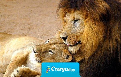 Любовь надо оценивать не по силе страсти, а по верности и прочности.